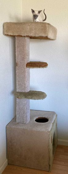 six foot homemade cat tree with blue point Siamese female kitten in living room