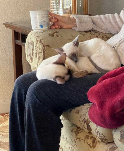 having morning coffee with Siamese cats