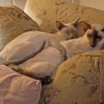 Happy healthy cats. SealMeal and Plaque Off