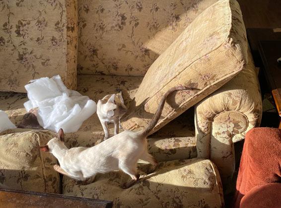 Sunshine, cats, and clean sofa cushions